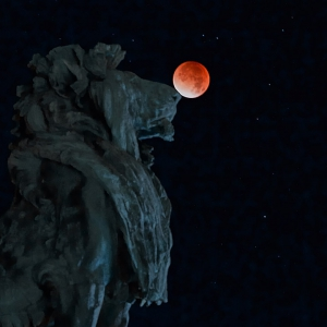 Nachtfotografie - Löwe spielt mit Blutmond
